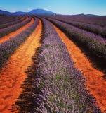Campos da alfazema Foto de Stock Royalty Free