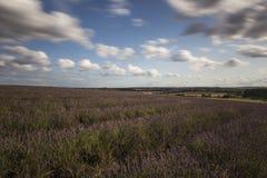 Campos da alfazema de Hitchin Fotografia de Stock Royalty Free