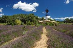 Campos da alfazema em France Foto de Stock