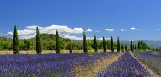 Campos da alfazema em Provence fotos de stock royalty free