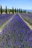 Campos da alfazema em Provence fotos de stock