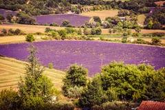Campos da alfazema em Provence imagem de stock royalty free