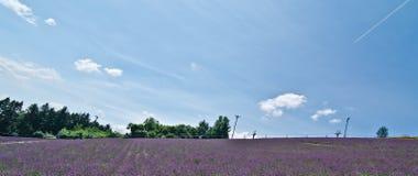Campos da alfazema, Hokkaido, Japão fotografia de stock