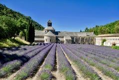Campos da alfazema na abadia de Senanque fotos de stock