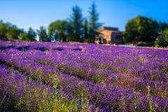Campos da alfazema perto do Provence francês imagens de stock