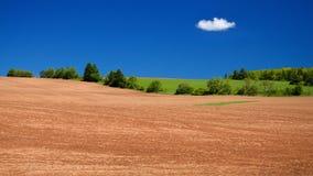 Campos da batata, PEI fotografia de stock