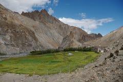 Campos da cevada no alto-deserto Foto de Stock