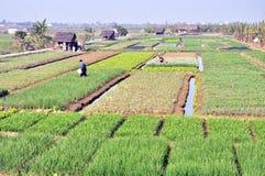 Campos da colheita Fotografia de Stock Royalty Free