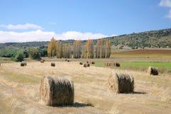 Campos da colheita com pacotes da forragem Foto de Stock