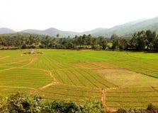 Campos da colheita dos retalhos da Índia Foto de Stock Royalty Free