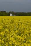 Campos da colza na Suécia do sul Imagem de Stock