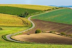 Campos da estrada e do outono Imagens de Stock