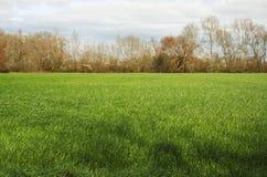 Campos da grama com uma fileira das árvores Fotos de Stock