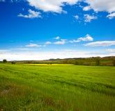 Campos da mola do cereal em Castilla Imagem de Stock Royalty Free