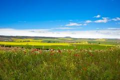 Campos da mola do cereal em Castilla Imagens de Stock Royalty Free