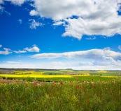 Campos da mola do cereal em Castilla Foto de Stock