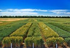 Campos da semente. Fileiras da semente. Imagem de Stock