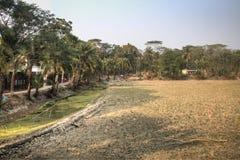 Campos da vila em Bagerhat, Bangladesh fotos de stock royalty free