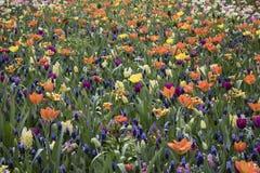 Campos das flores foto de stock royalty free