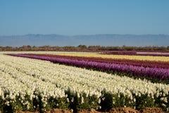 Campos das flores conservadas em estoque Imagens de Stock Royalty Free