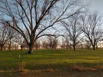 Campos de Alabama imagens de stock