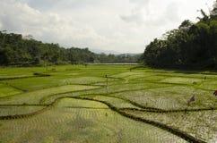Campos de almofada Foto de Stock
