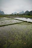Campos de almofada ao longo de Li River em Yangshuo (Guilin, China) Foto de Stock Royalty Free
