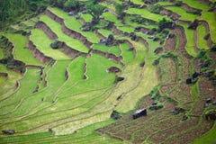 Campos de almofada do arroz Foto de Stock