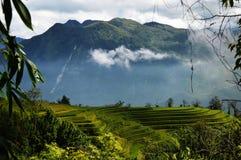 Campos de almofada do arroz em Vietname Imagens de Stock
