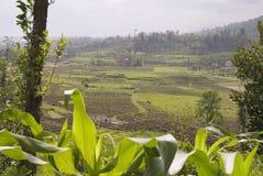 Campos de almofada do arroz, Nagarkot, Kathmandu, Nepal Fotografia de Stock
