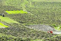 Campos de almofada do arroz, Nagarkot, Kathmandu, Nepal Fotos de Stock Royalty Free