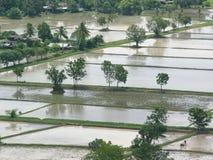 Campos de almofada inundados fotografia de stock