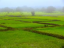 Campos de almofada logo após o cultivo maharashtra fotografia de stock royalty free