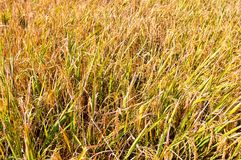 Campos de almofada na terra Foto de Stock