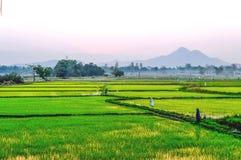 Campos de almofada verdes Fotografia de Stock