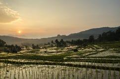 Campos de arroz Imágenes de archivo libres de regalías
