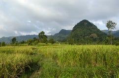 Campos de arroz Foto de archivo