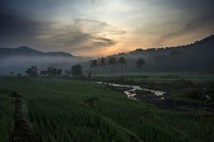 Campos de arroz Fotos de archivo libres de regalías