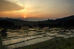Campos de arroz Fotos de archivo