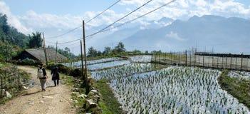 Campos de arroz en el PA del Sa Fotos de archivo libres de regalías