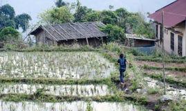 Campos de arroz en el PA del Sa Fotografía de archivo libre de regalías