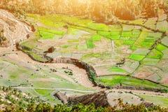 Campos de arroz en Nepal Imágenes de archivo libres de regalías