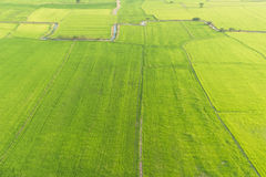Campos de arroz enormes Fotografía de archivo libre de regalías