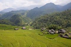 Campos de arroz, pueblo y una selva Foto de archivo
