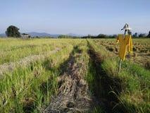 Campos de arroz y espantapájaros fotografía de archivo libre de regalías
