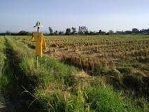 Campos de arroz y espantapájaros fotos de archivo libres de regalías