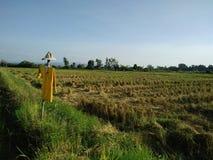 Campos de arroz y espantapájaros fotografía de archivo