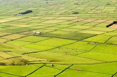 Campos de Azore imagem de stock royalty free