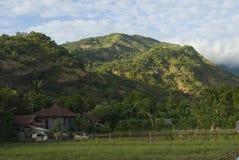 Campos de Bali Fotos de archivo libres de regalías