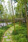 Campos de bambú, China Fotos de archivo